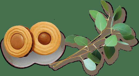 Biljka i noblice